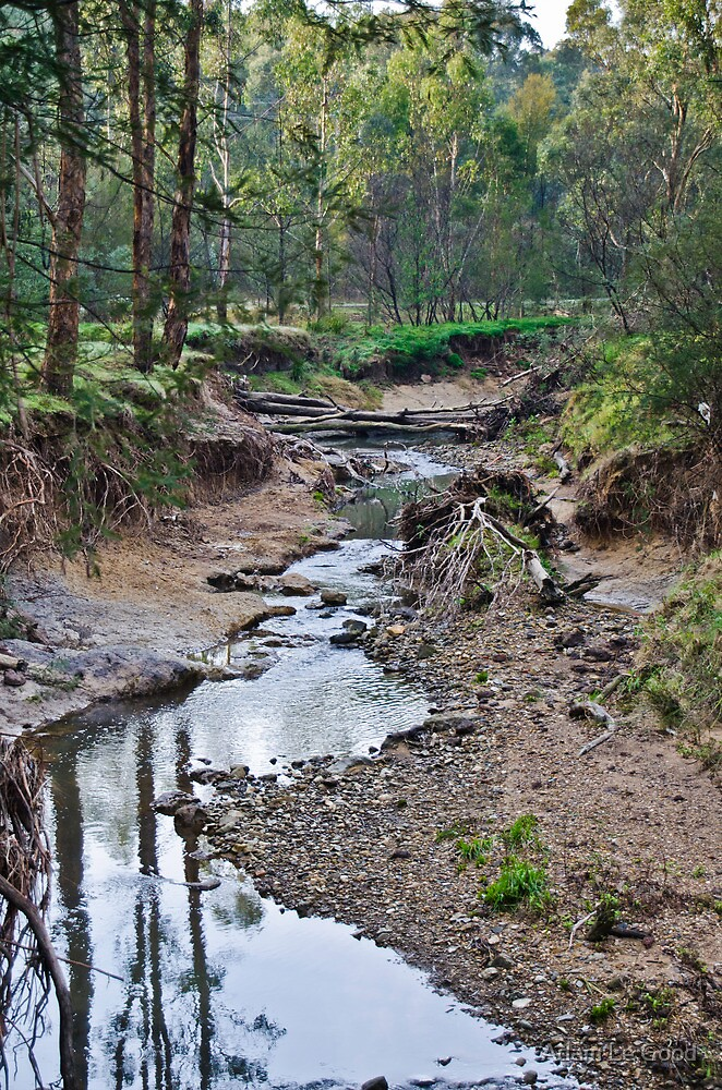 Mullum Mullum Creek  by Adam Le Good