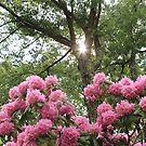 Succulent by jroch