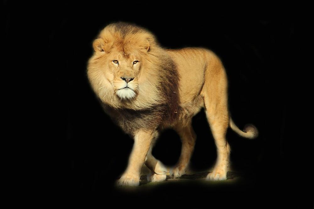 Lions Pride... by Chris Kean