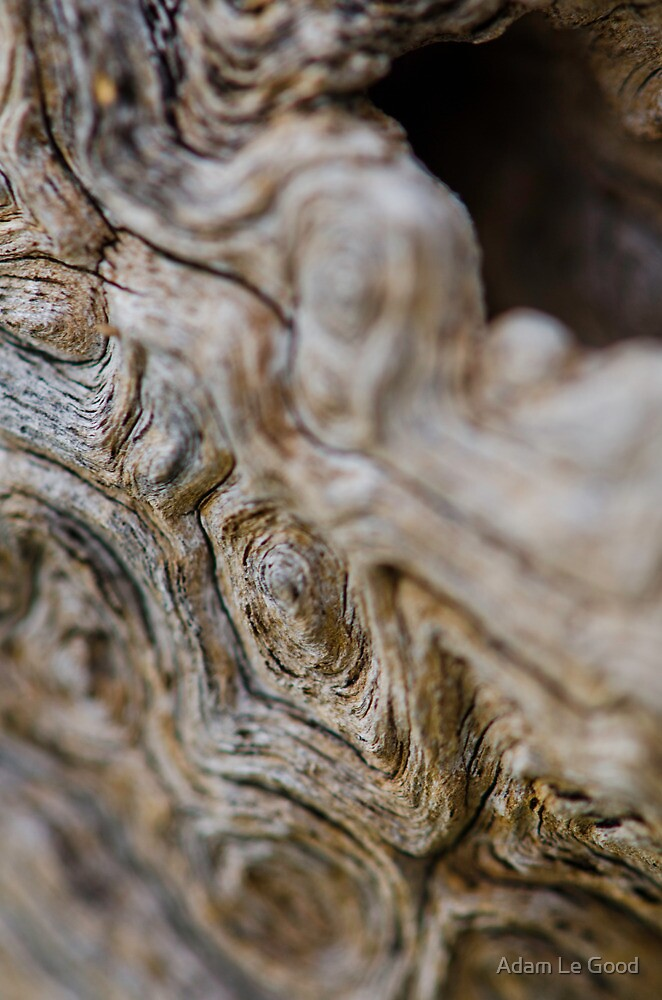Tree trunk road map IV by Adam Le Good
