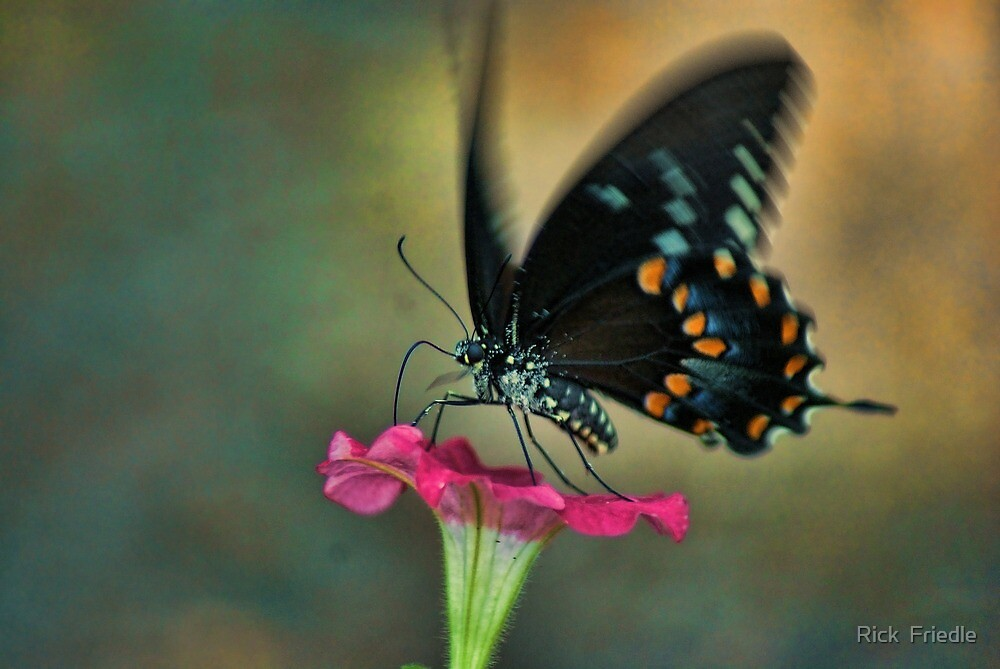 All A Flutter by Rick  Friedle