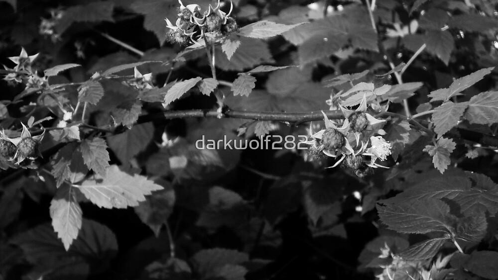 Raspberries by darkwolf282