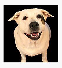 Good Dog Photographic Print