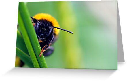 Peek-A-Bee by Stephanie Foote