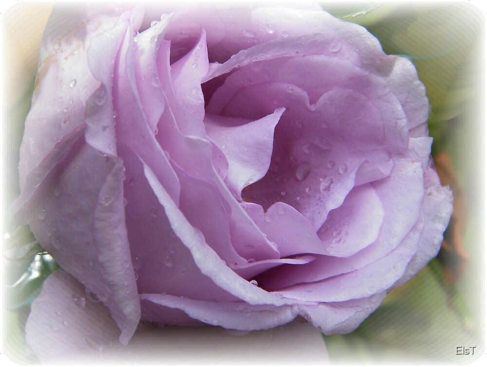 Very Lilac by ElsT
