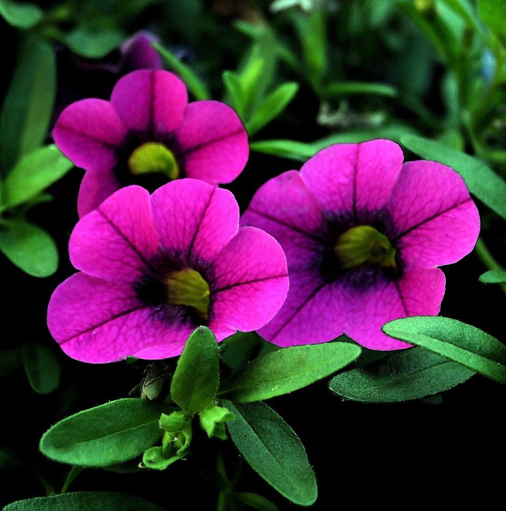 Purple Petunias by Karen Harrison