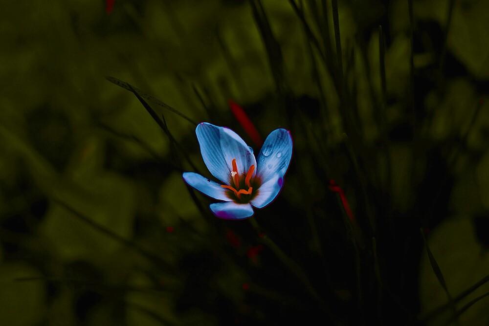 in my dark garden.  by queenenigma