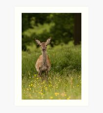 Doe a deer  Art Print