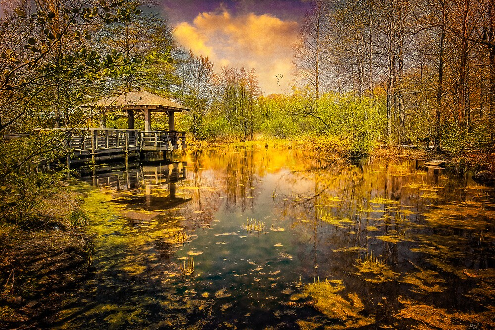 The Pond by Chris Lord