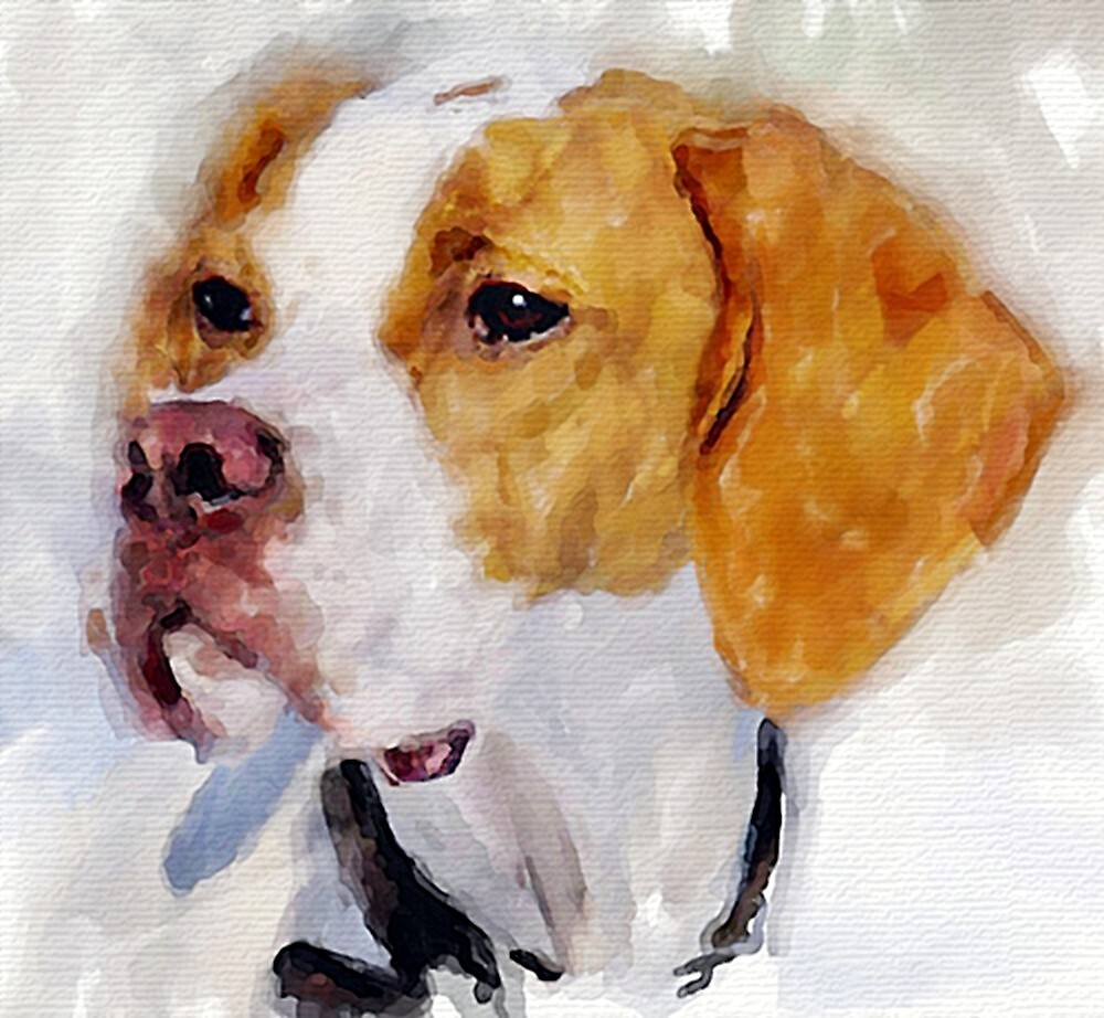 Beagle Dog Portrait by Oldetimemercan