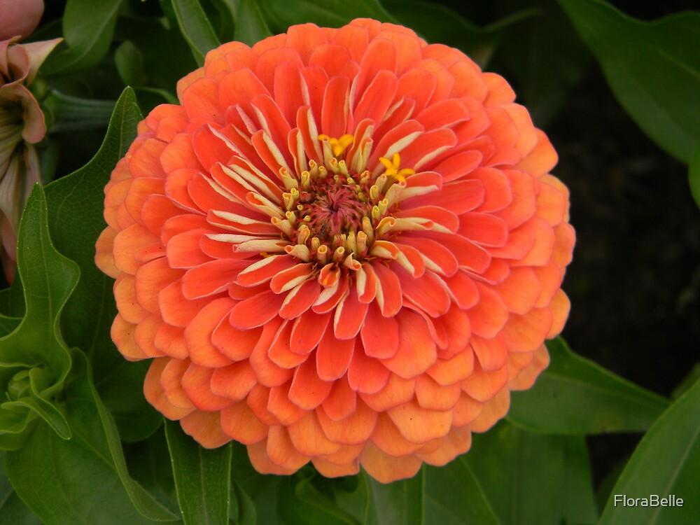 Orange Ya Glad I'm a Zinnia? by FloraBelle