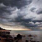 Winter Storm by Stephanie Johnson