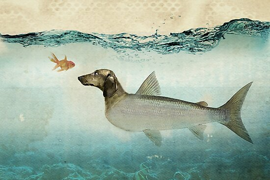 dog fish by Vin  Zzep