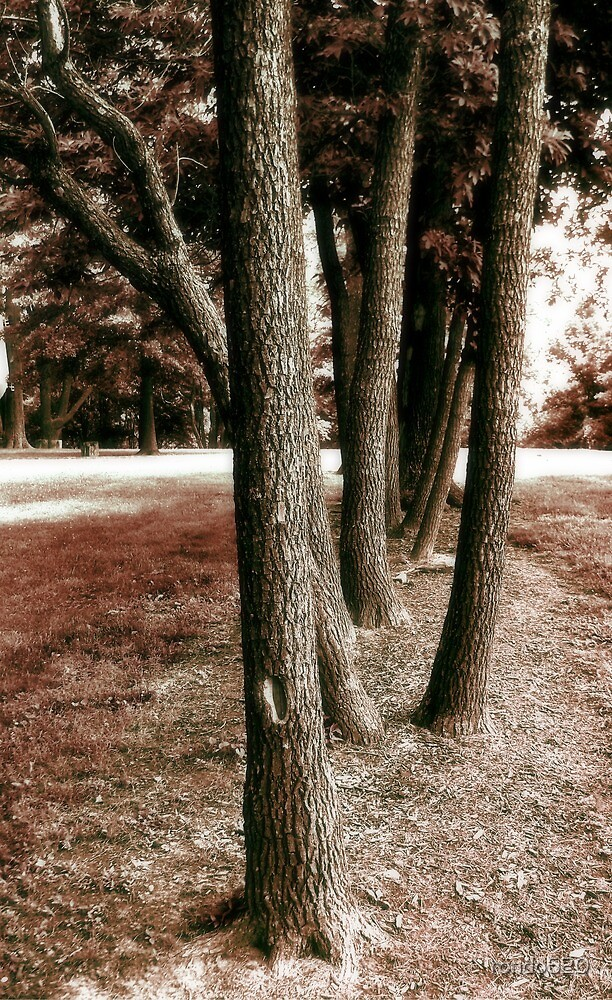 Trees001 by rondo620