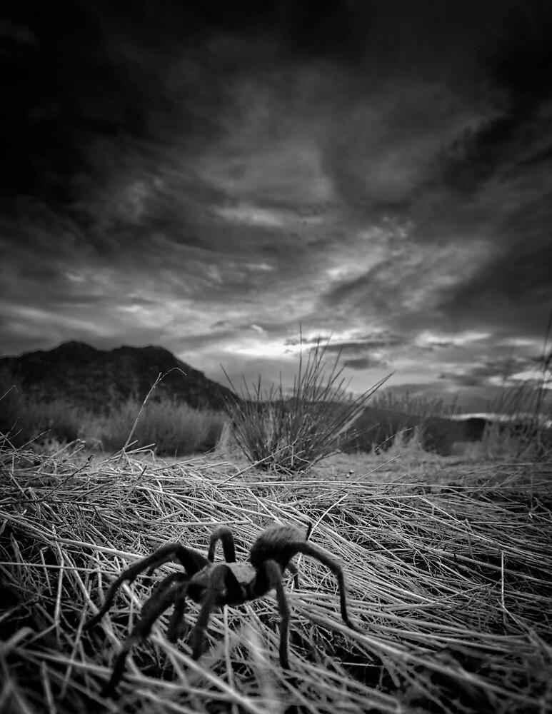 Spiderazzi by Bob Larson