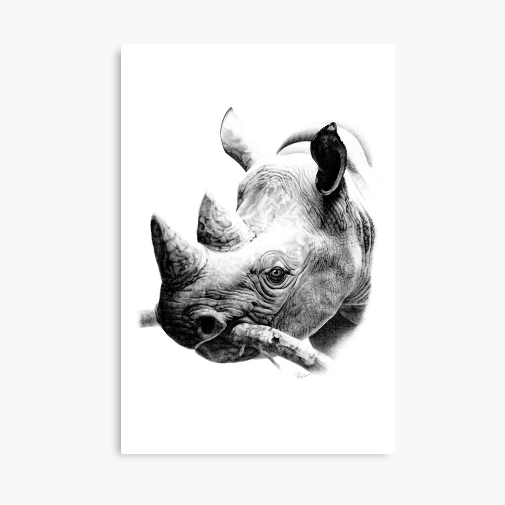 Rhino in Pencil Canvas Print