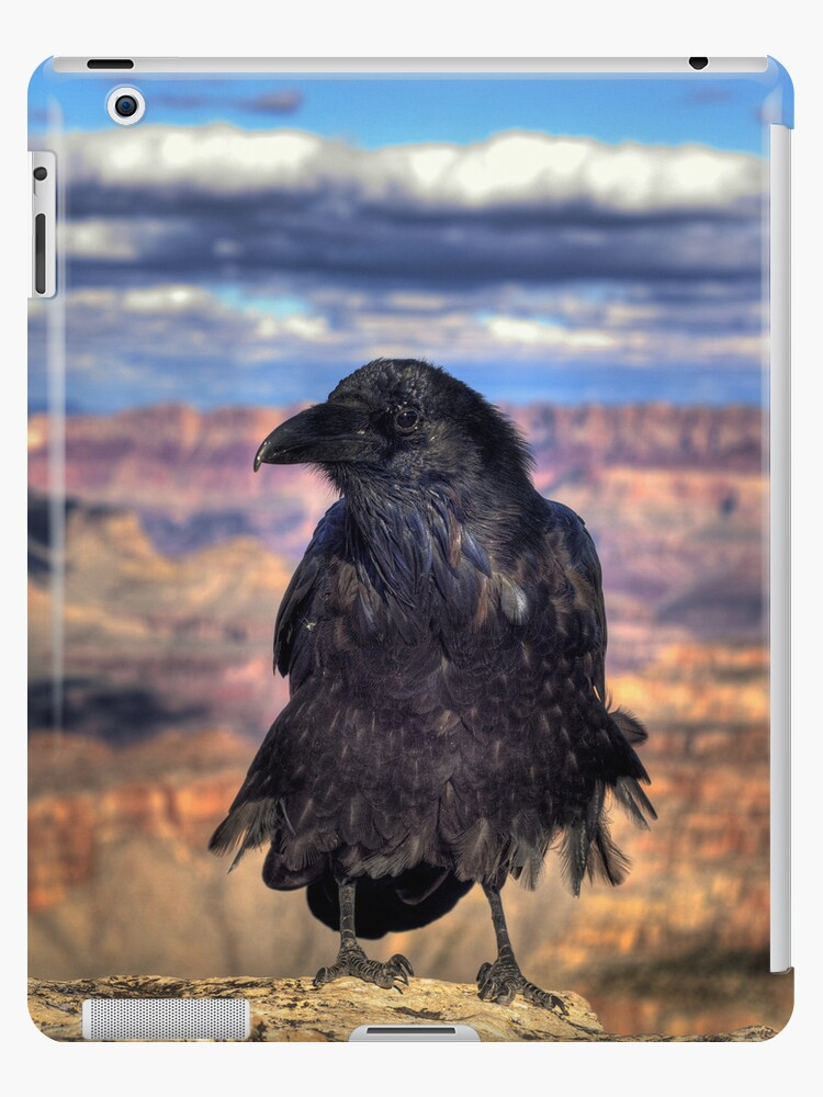 Canyon Raven iPad Case by K D Graves Photography