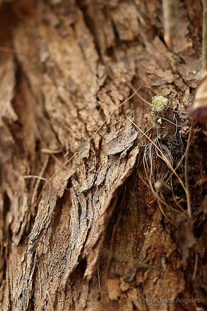 Tree bark by Louis Delos Angeles