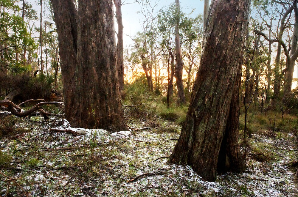 Frosty Morning at Mount Lofty by Barb Leopold