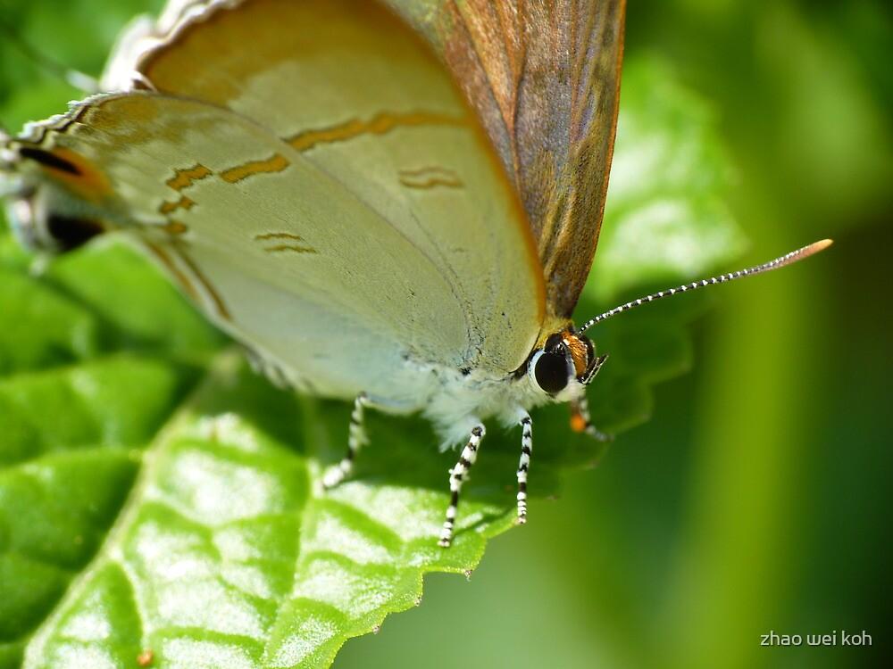 Butterfly by zhao wei koh