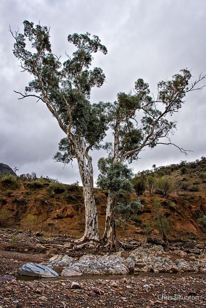 Brachina Gorge trees by Chris Brunton