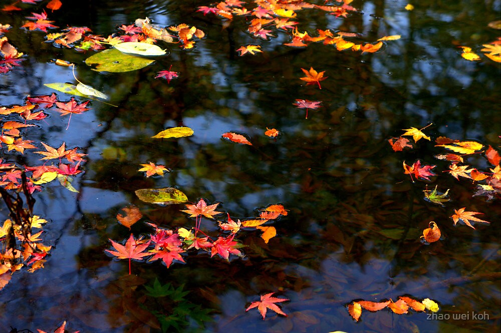 Autumn leaves by zhao wei koh