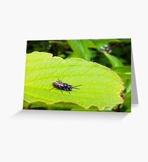Fly on green leaf Greeting Card