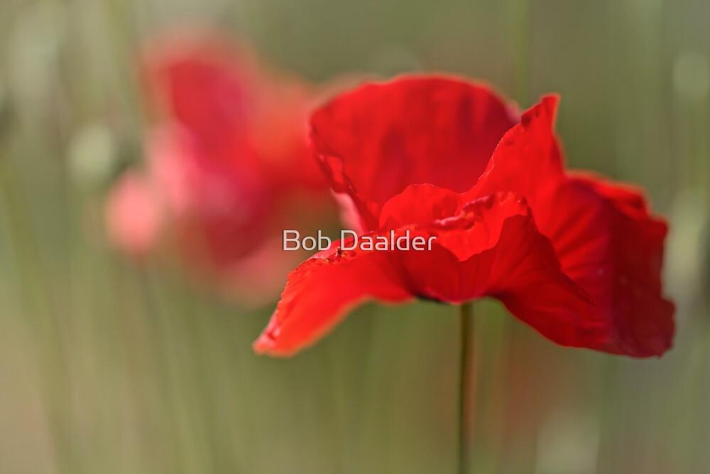 Summer Love.... by Bob Daalder