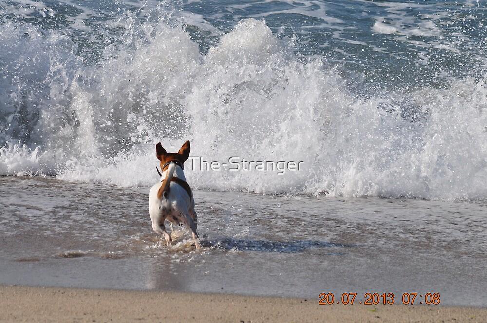 DOG-GONE WAVES! by The-Stranger