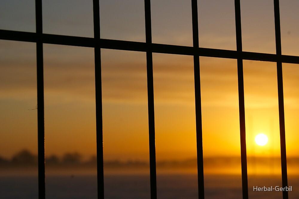 Sun Trap by Herbal-Gerbil