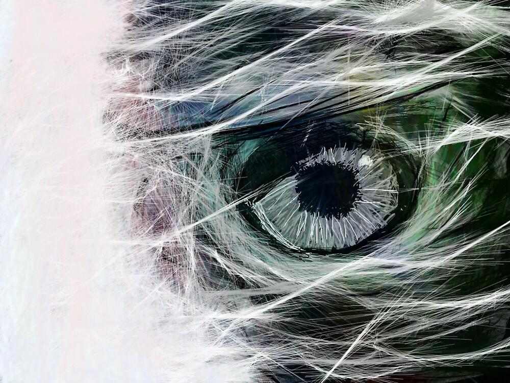 jaroslav kocian : eagle_eye by verivela