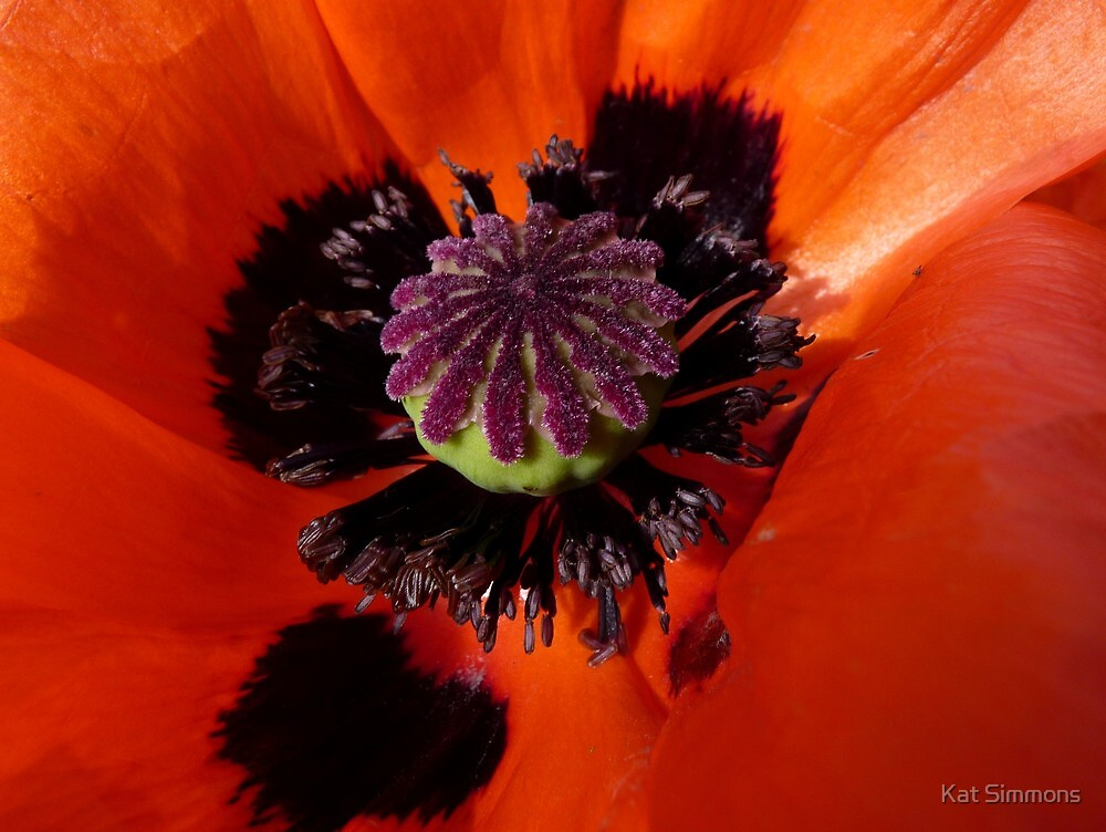 The Heart of the Poppy by Kat Simmons