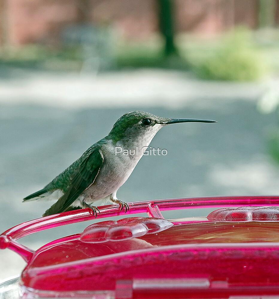 Hummingbird Defender by Paul Gitto