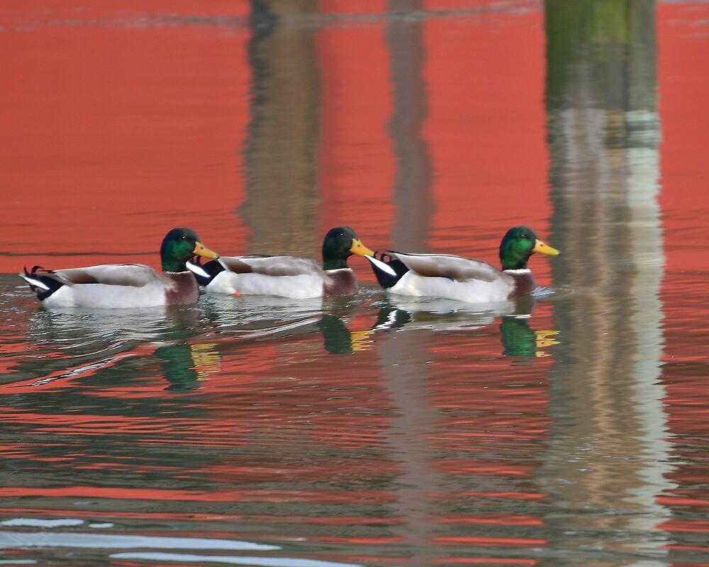 Rothko Ducks by Dick  Cooper