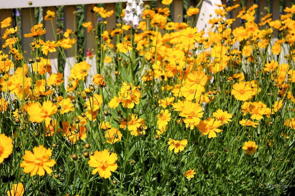Yellow Flowers by WeeZie