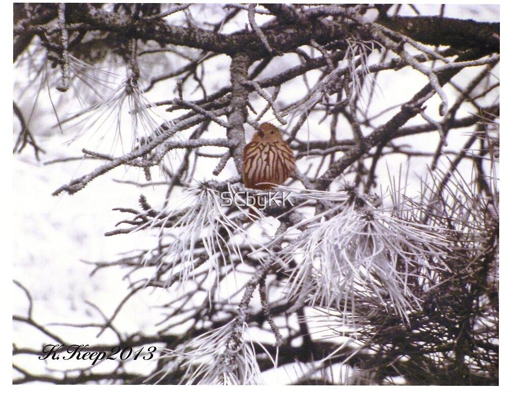Little Brown Bird by SCbyKK