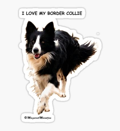 BORDER COLLIE TEESHIRT  -  ON REQUEST Sticker
