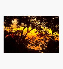 tropical  Photographic Print