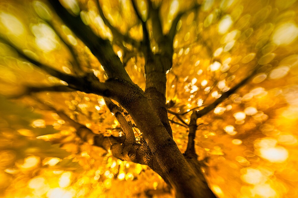 Golden by jaymephoto