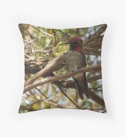 Anna's Hummingbird ~ Male  Throw Pillow