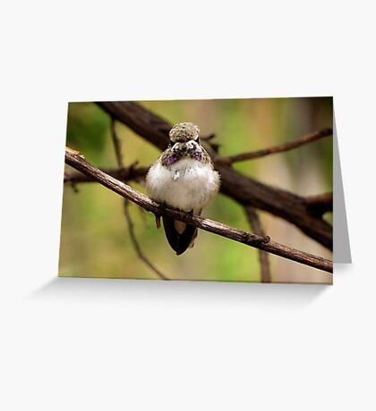 Costa's Hummingbird~ Juvenile Greeting Card