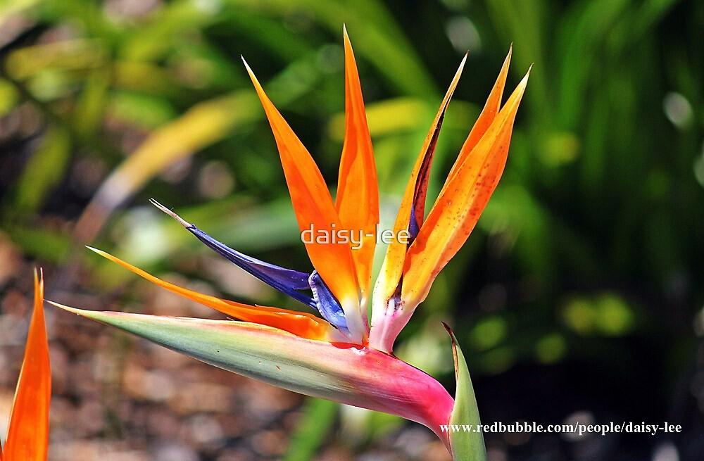 Bird of Paradise by daisy-lee