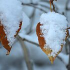 First Snowfall by Laurie Minor