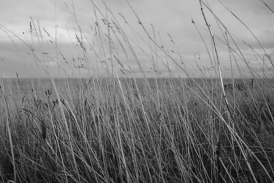 Flinders Grass by Lauren Eagle