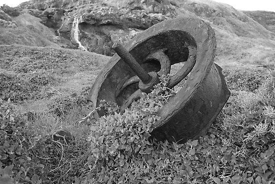 Flinders Rust  by Lauren Eagle
