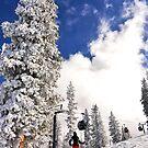 The Snowy Ajax Trees by Ryan Davison Crisp