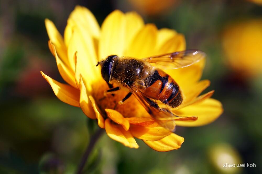 Bee Macro I by zhao wei koh