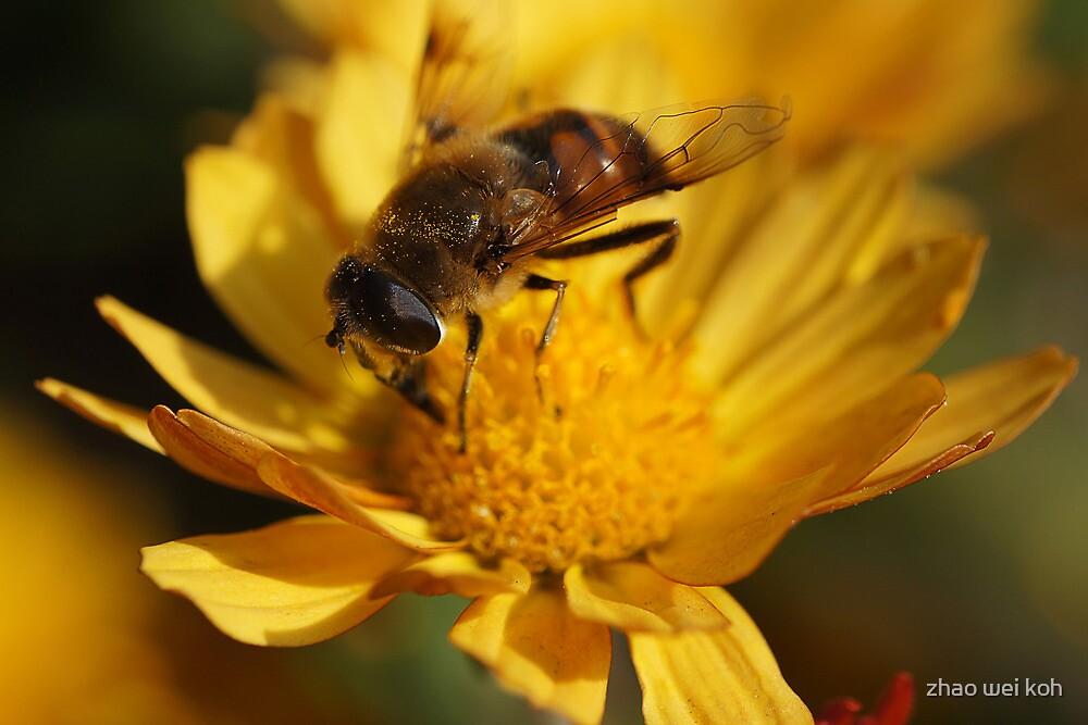 Bee Macro II by zhao wei koh