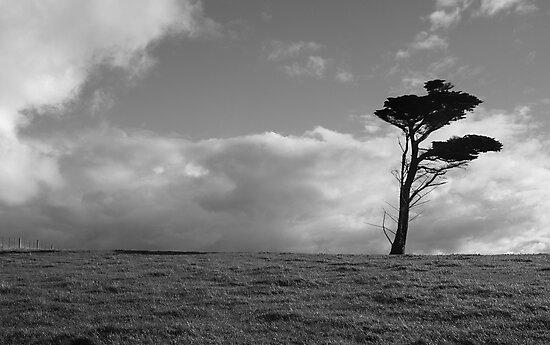 Flinders Tree by Lauren Eagle