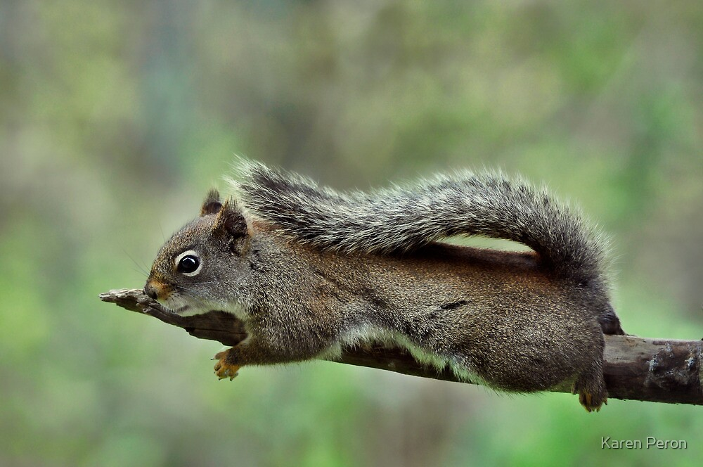 Out on a Limb by Karen Peron